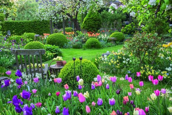 Gelungenes Wechselspiel zwischen Buchskugeln und Tulpen