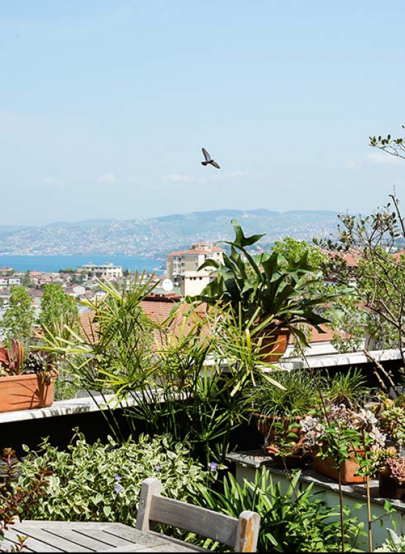 urban jungle interior book roof top plants view