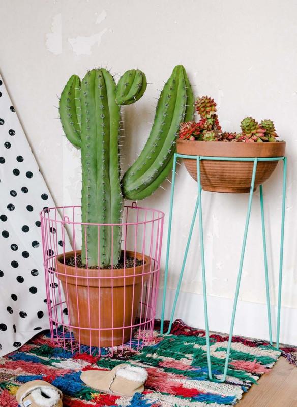 urban jungle interior handy tips plant lovers