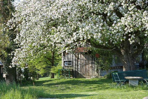 Traumhafte Landgärten 088-089_holmer_anna_fruehling-30