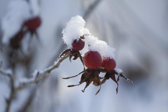 Traumhafte Landgärten 156-157_wolf_winter-9