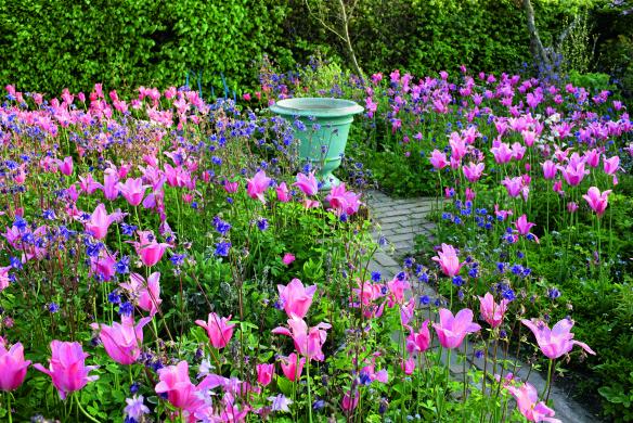 Türkisblaues Pflanzgefäß zwischen Akelei und lilienblütiger