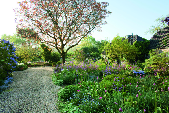 Einfahrt mit Walnussbaum am Cottage-Beet