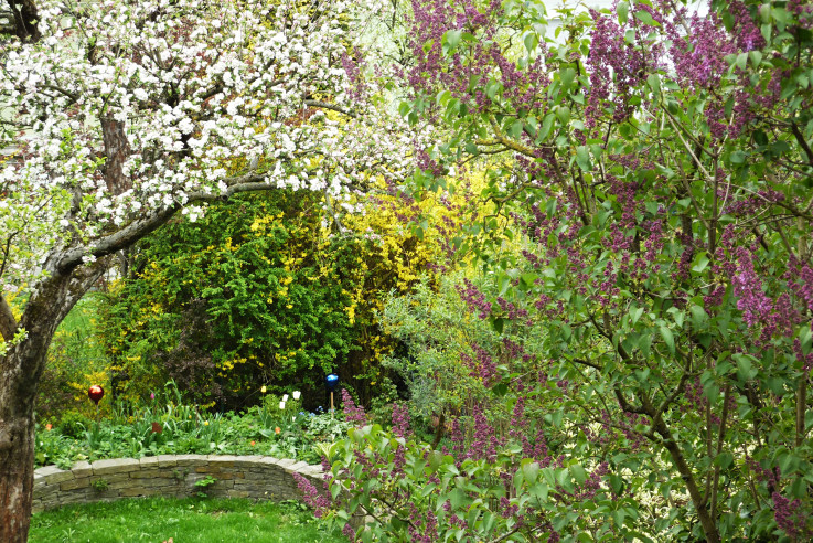 Sträucher im Garten