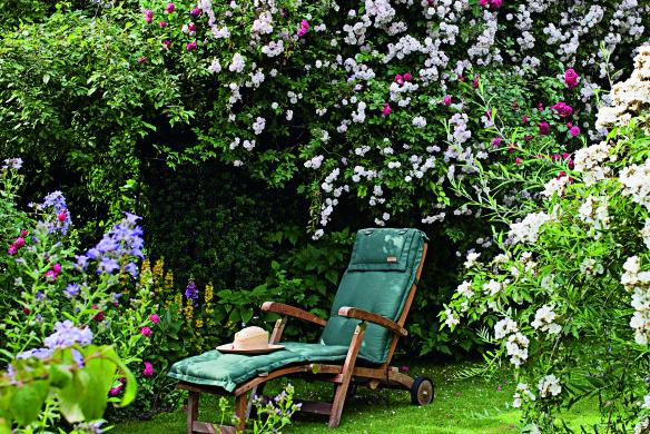 Sonnenliege zwischen Rosen - (Paul's Himalayan Musk / Strauchros Gartenideen