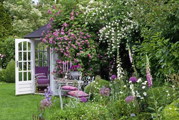 Kletterrose 'Russeliana' am Gartenhaus (und Philadelphus coronar