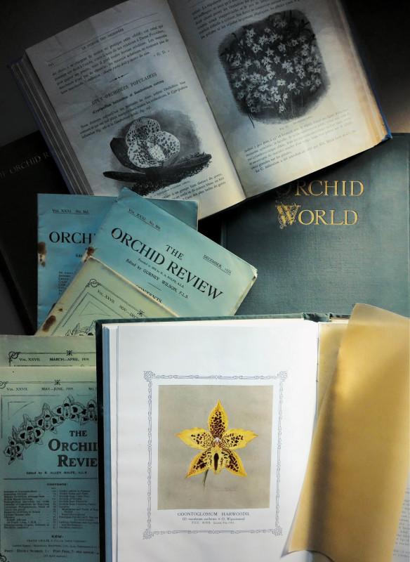 einzigartiges Material über die Geschichte der Orchidee
