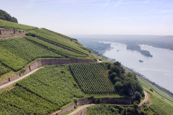 Weinberge am Rhein von Georg Breuer