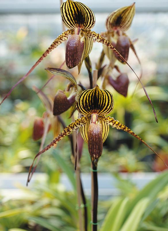 orchideen die weltweit wichtigsten Sammlungen