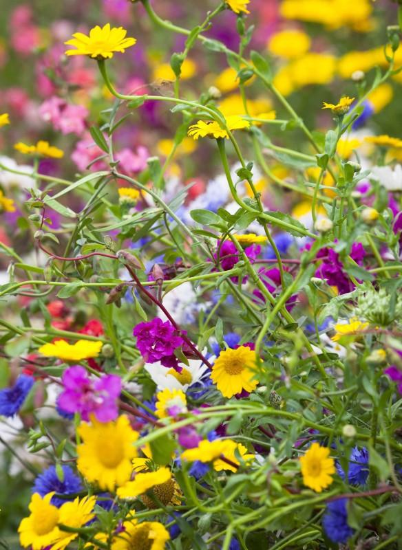 Blühende Beete Gartenratgeber