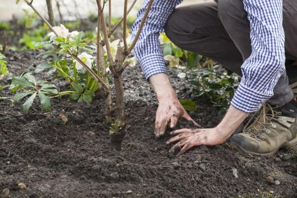 Pflanzen einsetzen Gartenratgeber