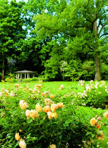 callwey-gärtendesjahres-weberkleinmaas