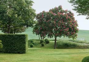 Kastanienbäume, Hainbuchenhecke und Buchskugeln
