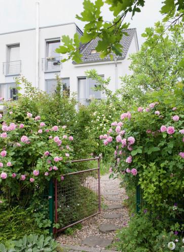 Gartentor mit Rose 'Louise Odier'
