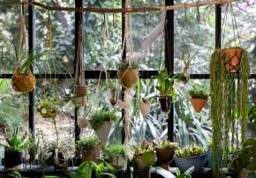 Urban Jungle Book Callwey Wohnbuch Pflanzen