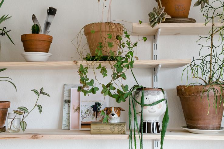 Urban Jungle Book Callwey Pflanzen DIY Ideen