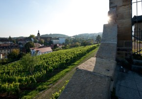 Bereits seit dem 12. Jahrhundert wurde am Südhang des Klosterbergs Wein angebaut. Jetzt wachsen am ältesten Weinberg der Stadt wieder Reben.