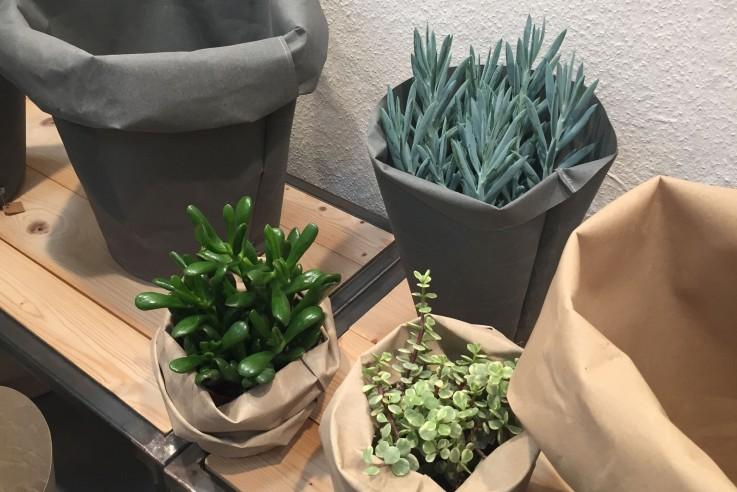 TrendSet Messe Pflanzen Sukkulenten Trend Wohnenn