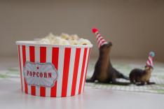 Kindergeburtstag Motto Zirkus Popcorn selber machen