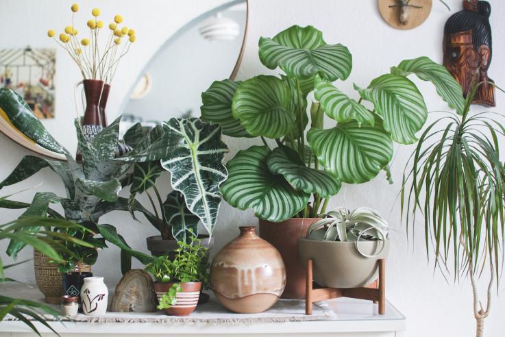 Wohnen in Grün Urban Jungle Wohnbuch Pflanzen Idee Deko