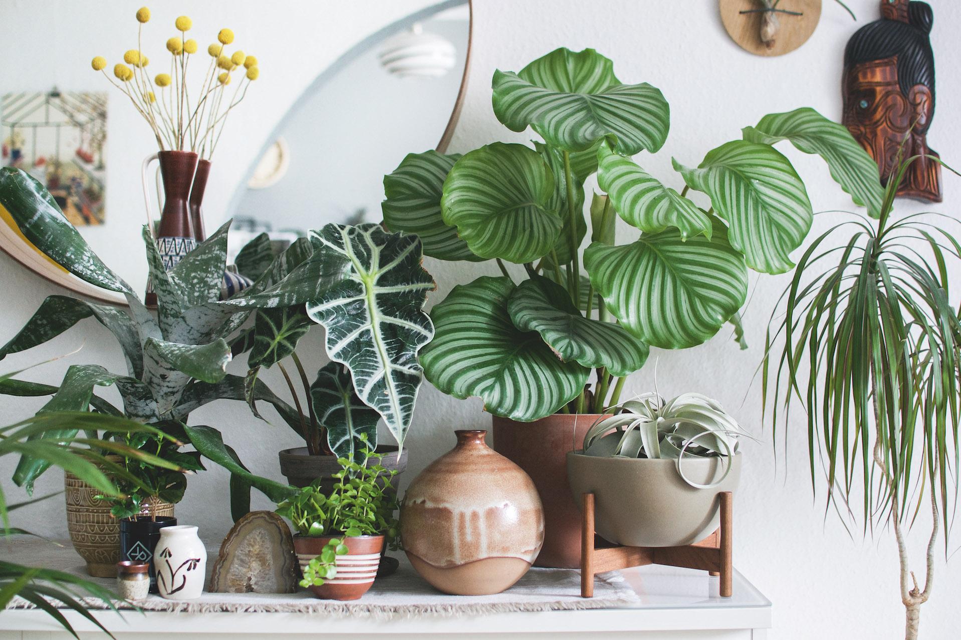 Aloe vera f r einsteiger wohnen in gr n wohnbuch for Wohnen dekoration