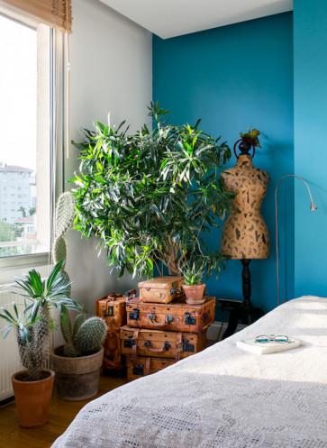 aloe vera f r einsteiger wohnen in gr n wohnbuch. Black Bedroom Furniture Sets. Home Design Ideas