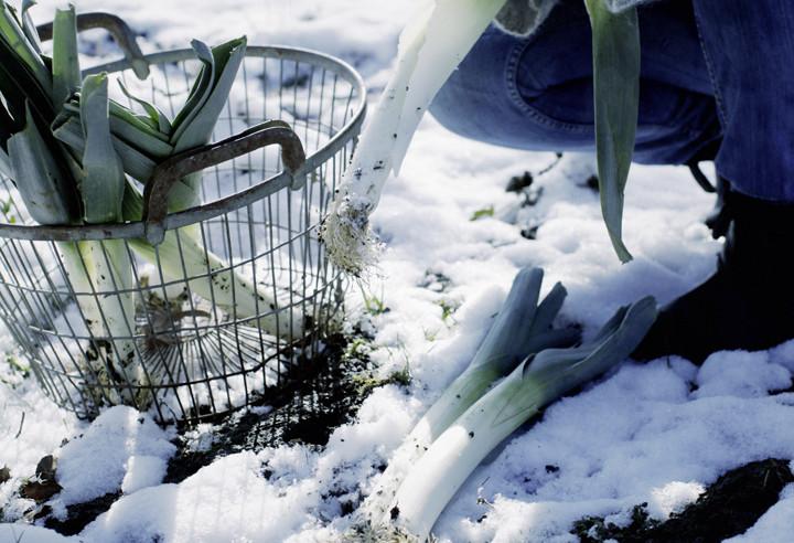 Garten winterfest machen Barbara Bonisolli 100 Rezepte aus meinem Garten Winterlauch