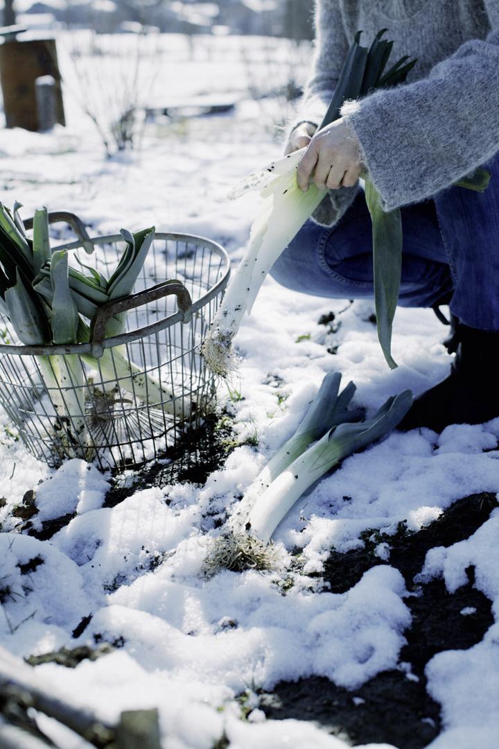 garten winterfest machen winterschlaf garten im winter. Black Bedroom Furniture Sets. Home Design Ideas