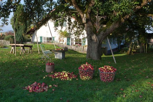 Traumhafte Landgärten 094-095_holmer_anna_herbst-41
