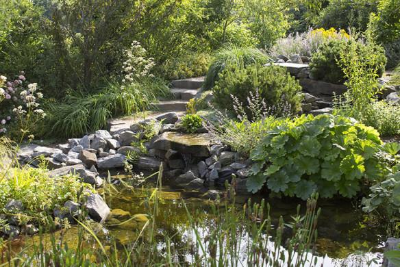 Romantische Gartenreisen in Deutschland Park der Gärten in Bad Zwischenahn Teichufer mit Darmera peltata