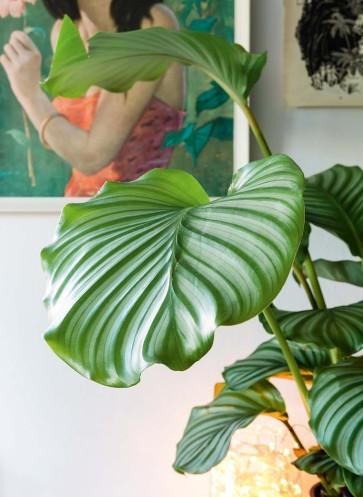 wohnen-mit-pflanzen--homestory