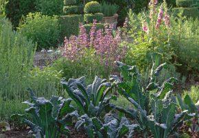 Ein Garten für die Seele - der Gemüsegarten