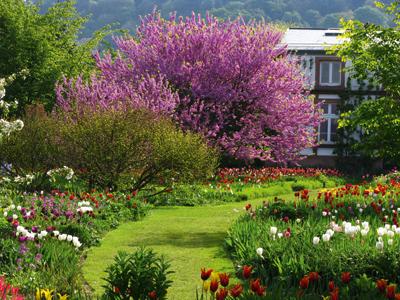 Romantische Gartenreisen in Deutschland Hermannshof Frühjahrsblüher WEB