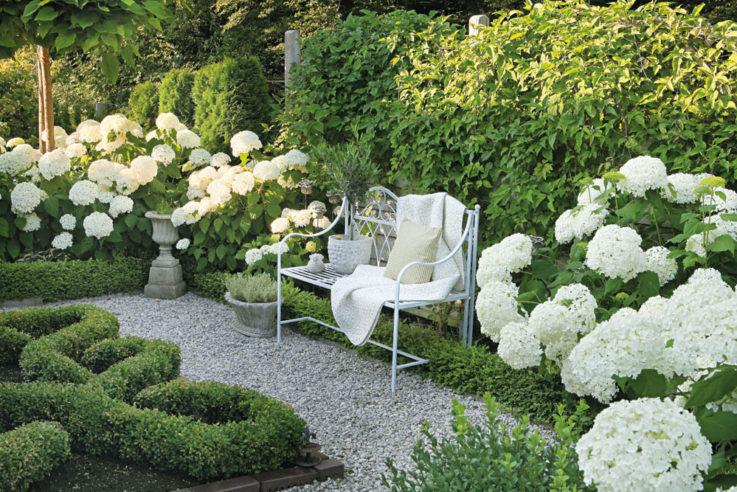 Die Sitzbank mit Blick auf das Knotenbeet wird von der weiß blühenden Strauch-Hortensie 'Annabelle' flankiert.