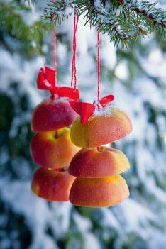 aufgefädelte Apfelhälften Deko Weihnachten