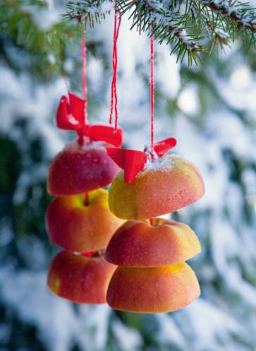 wintertraum weihnachtszeit äpfel