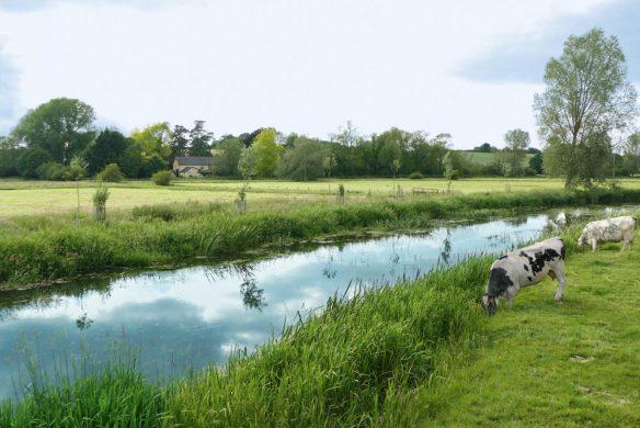 Neue romantische Gartenreisen in England Aufmacher Essex, Birne, P1960551WEB