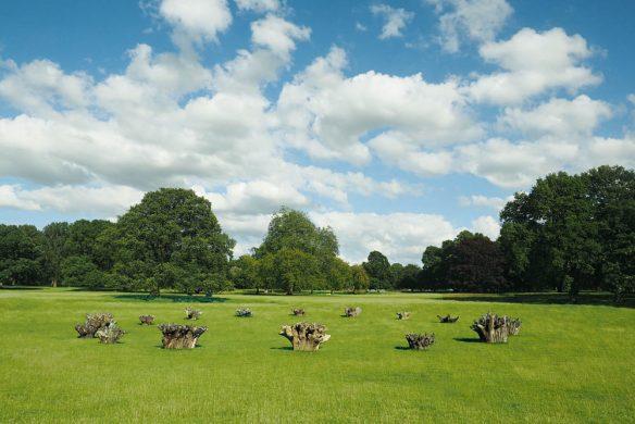 Wiese mit Baumstümpfen in England