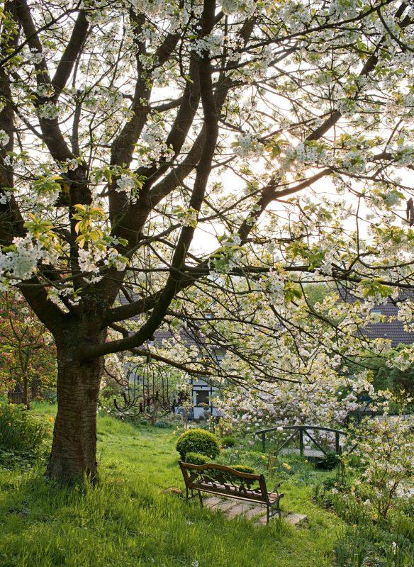 Verrückt nach Garten unter Kirschbaum