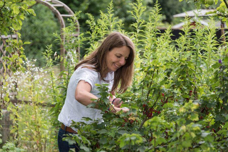 garden girls callwey gartenbuch pflanzen tipps