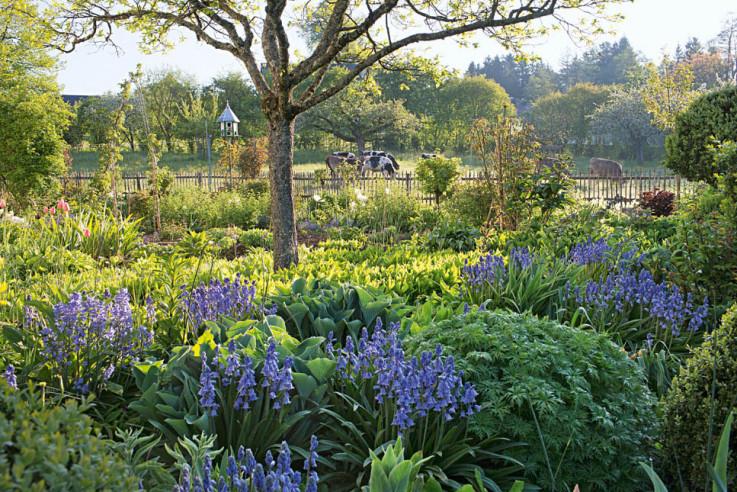 Hyacinthoides hispanica im Frühlingsgarten