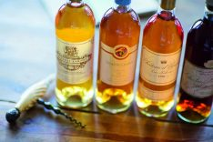 Paula Bosch; Wein; Rebsorten