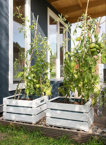 garden girls gartenbuch callwey tomaten anpflanzen