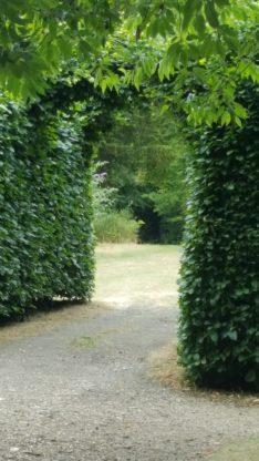 secret garden bushes