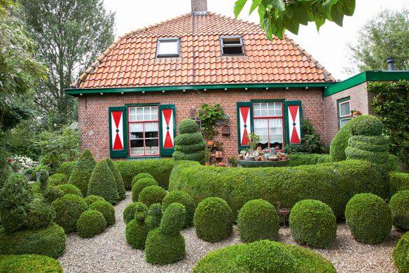 Vorgarten mit Buchsbaum,Buxus