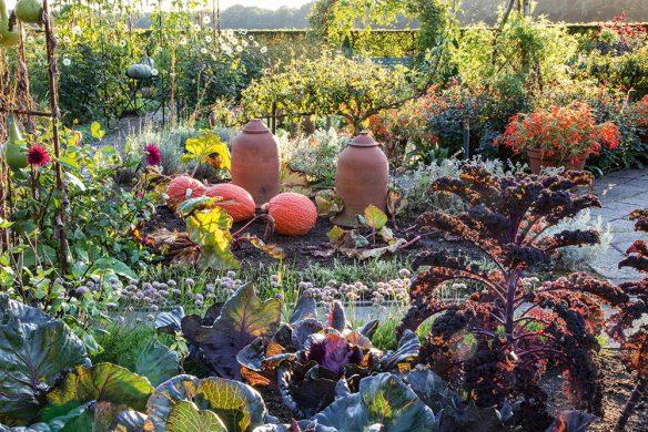 Herbstlicher Nutzgarten mit Grünkohl, Spitzkohl und Kürbis
