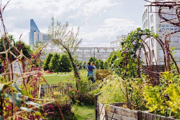 Urban Gardening_Düsselgrün
