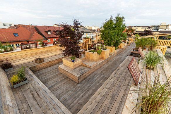 Urban Gardening_Kulturdachgarten