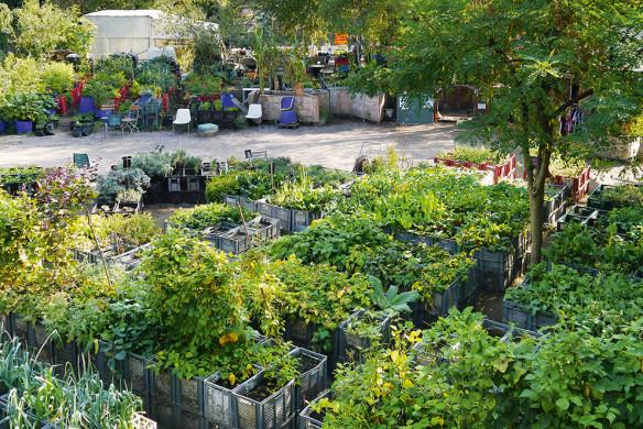 Urban Gardening_Prinzessinnengarten Berlin