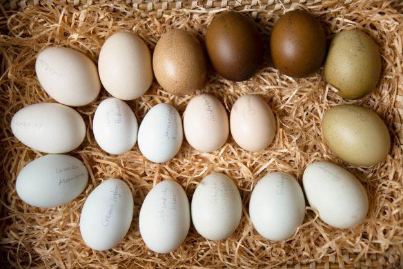 vom glück mit hühnern zu leben_isabellakerschbaumer